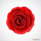 Il colore rosso è aumentato su priorità bassa bianca Immagini Stock