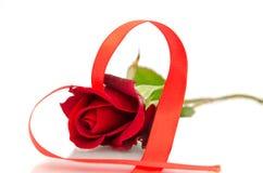 Il colore rosso è aumentato sul bianco Fotografie Stock