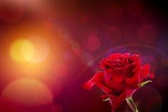 Il colore rosso è aumentato sulla priorità bassa del bokeh Fotografia Stock Libera da Diritti