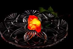 Il colore rosso arancione è aumentato Fotografia Stock