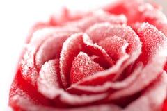 Il colore rosso congelato è aumentato nel gelo bianco Fotografie Stock Libere da Diritti