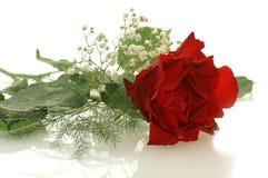 Il colore rosso piacevole è aumentato con piccoli fiori bianchi Immagini Stock Libere da Diritti