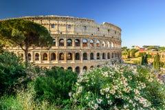 Il Colosseum magnifico ad alba, Roma, Italia, Europa immagine stock libera da diritti