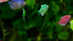 Il colourfull dell'acquario pesca in acqua blu profonda scura stock footage