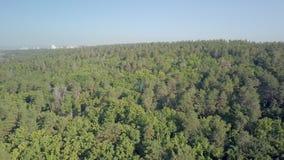 Il colpo aereo, macchina fotografica sta sorvolando la foresta mista densa nel giorno di estate soleggiato video d archivio