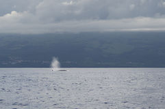 Il colpo dalla balena di un Bryde immagini stock libere da diritti