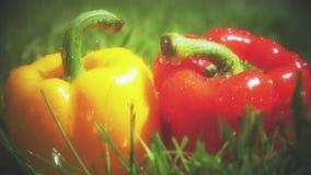 Il colpo del movimento lento dell'acqua spruzza sui peperoni dolci rossi e gialli archivi video