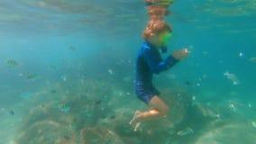 il colpo lento 4k di un ragazzino che si immerge in un tubo di respirazione e della maschera alimenta i pesci tropicali in un bel video d archivio