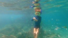 il colpo lento 4k di un ragazzino che si immerge in un tubo di respirazione e della maschera alimenta i pesci tropicali in un bel archivi video
