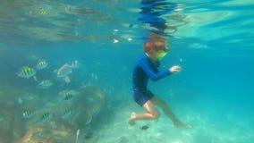 il colpo lento 4k di un ragazzino che si immerge in un tubo di respirazione e della maschera alimenta i pesci tropicali in un bel stock footage