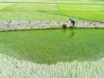 Il coltivatore è semenzale della semina Fotografia Stock Libera da Diritti