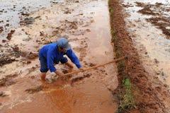Il coltivatore cinese lavora duro sul giacimento del riso Fotografie Stock Libere da Diritti