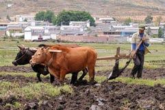Il coltivatore cinese lavora in un giacimento del riso Immagini Stock Libere da Diritti
