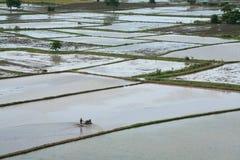 Il coltivatore guida il trattore per coltivare sullo sbarco della risaia Immagine Stock