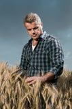 Il coltivatore ha cura del suo campo di frumento Fotografia Stock Libera da Diritti