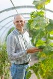Il coltivatore maschio osserva la pianta dei cetrioli Fotografia Stock Libera da Diritti