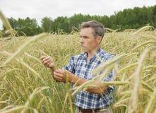 Il coltivatore nel campo Fotografia Stock Libera da Diritti