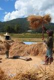 Il coltivatore sta trebbiando il granulo Immagini Stock Libere da Diritti
