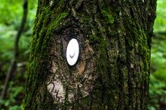 Il commutatore nel legno Fotografia Stock Libera da Diritti