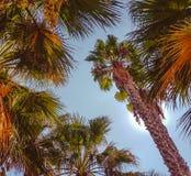 Il complète des palmiers contre le ciel et le soleil images libres de droits