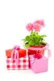 Il compleanno della madre Immagine Stock
