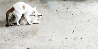 Il comportamento naturale del gatto immagine stock