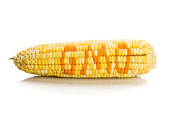 Il concetto del mais del cereale con GMO su cereale semina i noccioli Fotografia Stock Libera da Diritti
