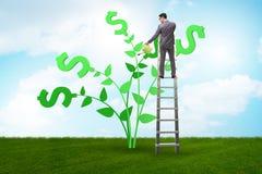 Il concetto dell'albero dei soldi con acqua dell'uomo d'affari fotografia stock libera da diritti