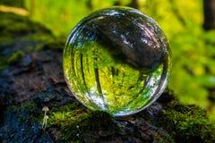 Il concetto della natura, foresta verde Fotografie Stock Libere da Diritti