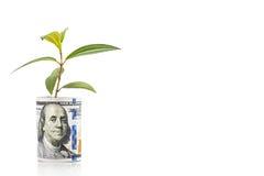 Il concetto della pianta verde si sviluppa sulla nota di valuta del dollaro americano Immagine Stock Libera da Diritti