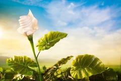Il concetto di energia, interra la pianta di lampadina amichevole Immagini Stock Libere da Diritti