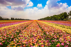 Il concetto di floricoltura industriale moderna immagini stock libere da diritti