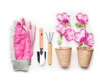 Il concetto di giardinaggio con gli strumenti di giardino, piantando fiorisce in vasi ed in guanti rosa su fondo bianco, vista su Fotografie Stock Libere da Diritti