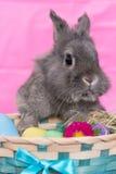 Il coniglietto di pasqua fotografia stock libera da diritti