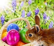 Il coniglietto di pasqua nasconde le uova immagini stock