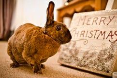 Il coniglietto festivo Fotografia Stock