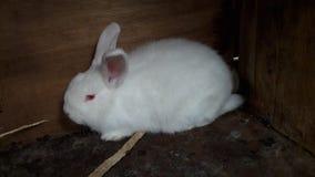 Il coniglio Immagine Stock