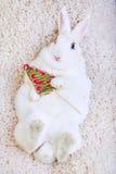Il coniglio bianco ha isolato su bianco che tiene una lecca-lecca sotto forma degli alberi di Natale Immagini Stock