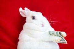 Il coniglio bianco isolato su un rosso tiene i soldi che si trovano sulla parte posteriore Fotografia Stock