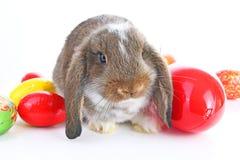 Il coniglio di coniglietto di pasqua pota con le uova su fondo bianco isolato Fotografia Stock Libera da Diritti