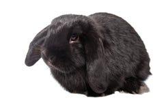 Il coniglio divertente del bambino pota su un fondo isolato Immagini Stock