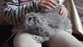 Il coniglio grigio si siede sulle ginocchia di un bambino video d archivio