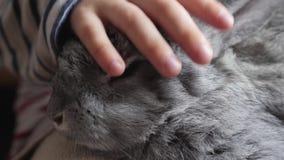 Il coniglio grigio si siede sulle ginocchia di un bambino Primo piano archivi video