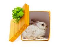 Il coniglio nella casella gialla fotografia stock libera da diritti