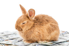 Il coniglio si trova sui soldi Fotografia Stock Libera da Diritti