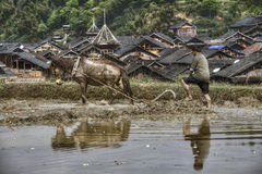 Il contadino asiatico ara la terra facendo uso di potere del cavallo, Cina Immagini Stock