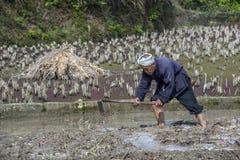 Il contadino cinese lavora il suolo nelle risaie facendo uso del piccone Immagini Stock Libere da Diritti