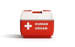 il contenitore chiuso 3d rosso di frigorifero dell'organo umano rende su backg bianco illustrazione di stock