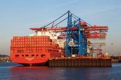 Il contenitore cranes nel porto di Amburgo, Germania Fotografia Stock