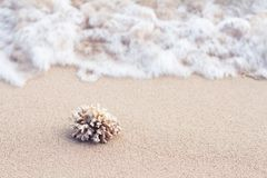 Il corallo dell'oceano sulla sabbia della spiaggia dell'isola Fotografia Stock